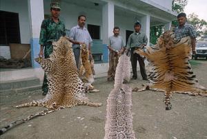 Gli operatori del WWF e le guardie forestali con pelli e pellicce sequestrate ai bracconieri